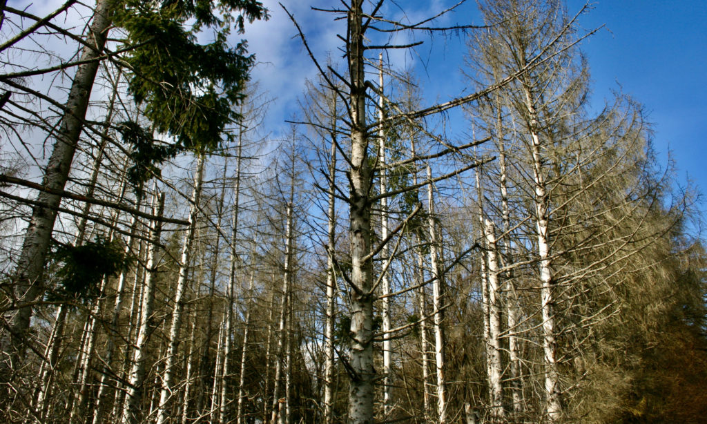 Unser Wald ist bedroht.